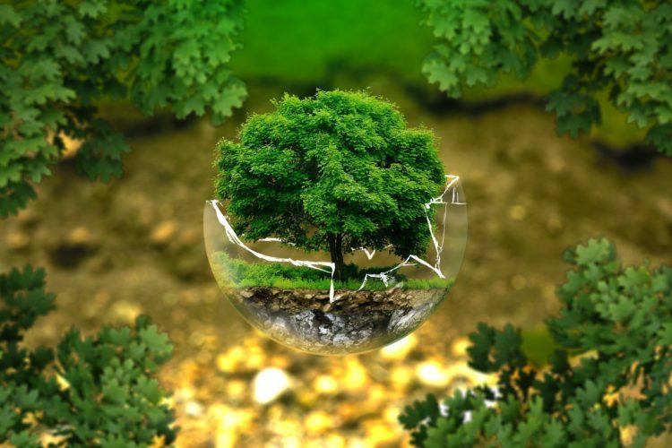 drzewo w szkle